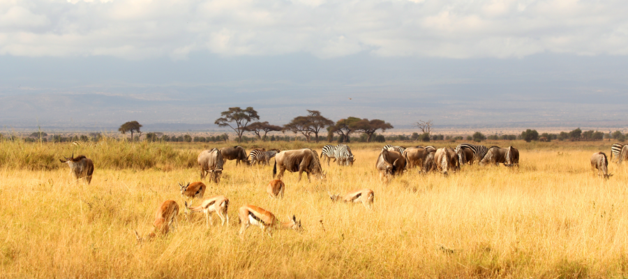 7-Days-Tsavo-East-Tsavo-West-Amboseli-Lake-Nakuru-Masai-Mara-Safari-Tour-kenya-safari