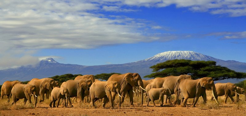 Amboseli-National-Park-on-Sema-Jambo1
