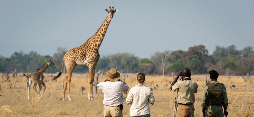 Zambia-RPS-safari