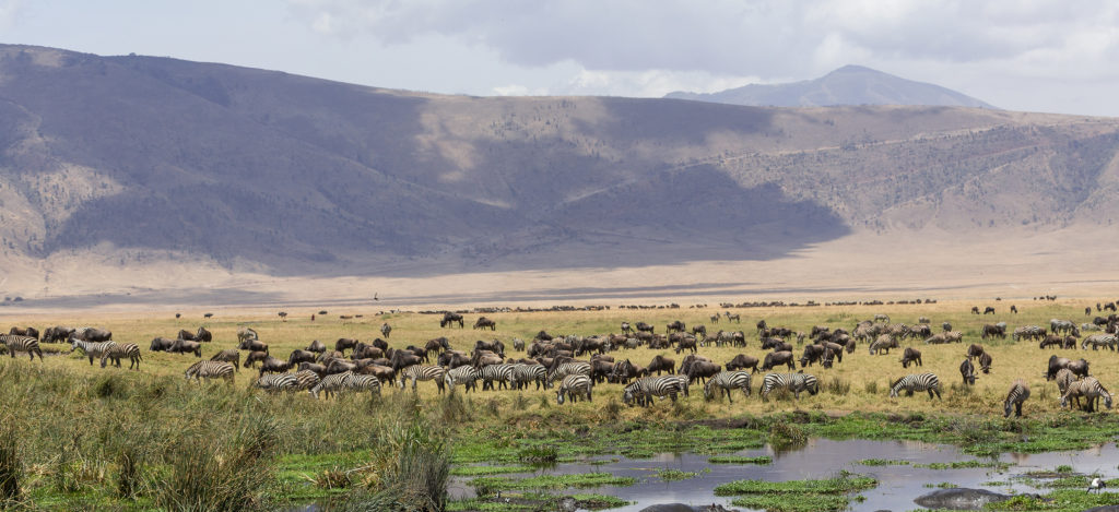 Hippo pool at Ngorongoro Crater, Tanzania